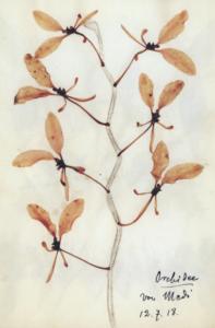 De los herbarios de Rosa Luxemburgo.